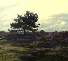 Tree in Heatherfields by ienemien