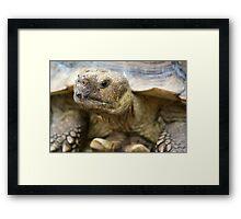 Tortoise Framed Print