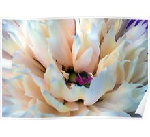 Floral Abstract 1 Poster