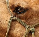 The Eye of the Camel by lamiel