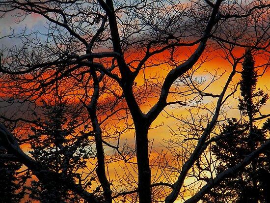 """""""Fiery Night"""" by Elfriede Fulda"""