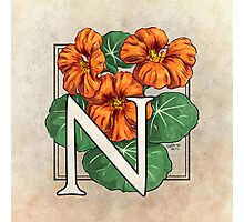 N is for Nasturtium Photographic Print