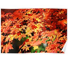 The Maple tree Poster