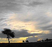 Lonely African tree by maashu