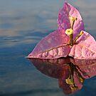 Lavender Lovely by Randy Richards