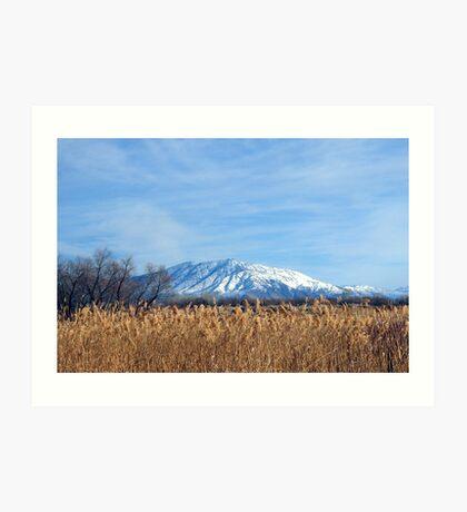 Fields Of Golden Grain Art Print