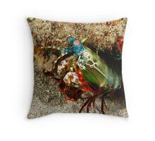 peacock mantis shrimp - onondactylus chiragra Throw Pillow