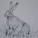 Hare Study field sketch by leunig