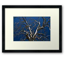 Silver limbs Framed Print