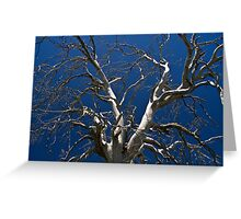 Silver limbs Greeting Card