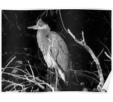 Grey Heron in Black & White Poster