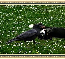 ☆ º ♥ `•.¸.•´ ♥ Crow Feeding Kitten~ Best Friends ☆ º ♥ `•.¸.•´ ♥ by ✿✿ Bonita ✿✿ ђєℓℓσ