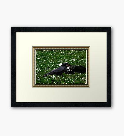 ☆ º ♥ `•.¸.•´ ♥ Crow Feeding Kitten~ Best Friends ☆ º ♥ `•.¸.•´ ♥ Framed Print