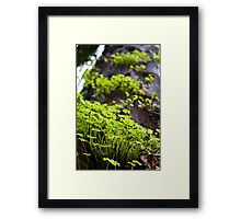 Clover Forest Framed Print