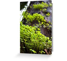 Clover Forest Greeting Card