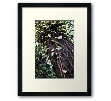Clinging Vines Framed Print