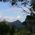 From Ridge to Ridge, Tallebudgera Valley by aussiebushstick