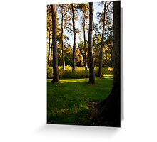 Autumn colours tall trees Greeting Card