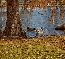 River Park Pond by Renee D. Miranda