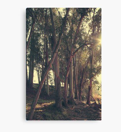 A Light Shining Through Canvas Print