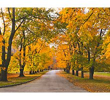 Under the yellow canopy Photographic Print