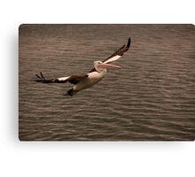 Pelican Glide Canvas Print