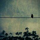 bird on a wire by Angel Warda