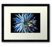 Blue and white chrysanthemum Framed Print