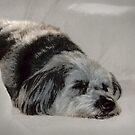 Puppy Dreams by Ginny Schmidt
