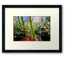 colors of the forest Framed Print