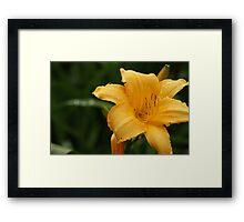yellow nature 2 - botanic gardens Framed Print