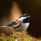 Chestnut-backed Chickadee by DJ LeMay