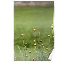 cute nature - botanic gardens Poster