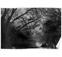 Eerie Trees Poster