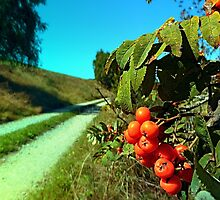Some berries and a hiking trail by Patrick Jobst