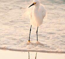 Ruffled Feathers by Beth Mason