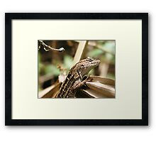 Curious Gecko Framed Print