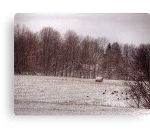 turkeys winter field  Canvas Print