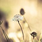 Reach for the sun by ╰⊰✿Sue✿⊱╮ Nueckel