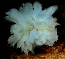 white peony layered by vigor