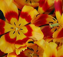 Beauty in Bloom by Rodney55