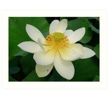 Kirsten Smith's 'heart of the lotus' Art Print
