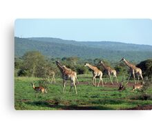 Early morning in God's Country Canvas Print