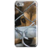 bat eared dog iPhone Case/Skin