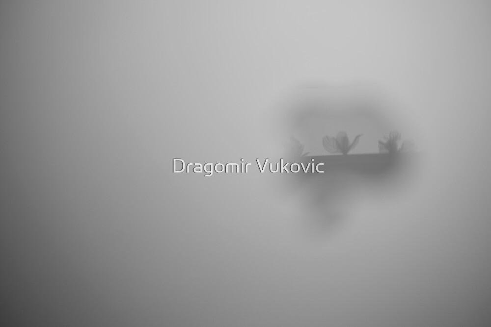 Flowers 2 by Dragomir Vukovic