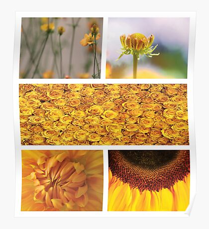 Collection ~ Yellow Flowers Poster