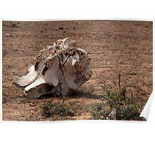 Death on the savanna Poster