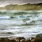 ~ Sea Spray ~ by Lynda Heins