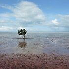 Mangrove tree by solena432