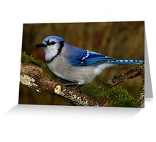 Blue Jay on Mossy Perch Greeting Card
